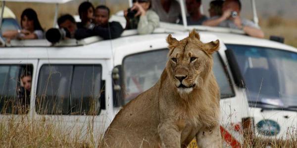 Tourists at the Masaai Mara National Reserve. FILE PHOTO | NMG