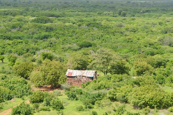 An aerial view of Boni Forest in Lamu County where Al-Shabaab militants have been hiding. Security forces conducting the Linda Boni operation have discovered and destroyed three hideouts belonging to the militants. FILE PHOTO | KEVIN ODIT | NATION MEDIA GROUP